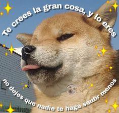 Y si uwu Cute Love Memes, Funny Love, Pingu Memes, Memes Lindos, Romantic Memes, Dankest Memes, Funny Memes, Cute Phrases, Wholesome Memes