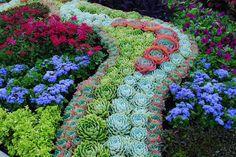 une belle allée de succulentes multicolores apporte une touche artistique au jardin