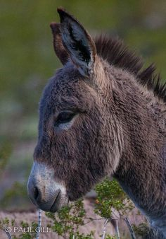 Baby Burro - Sweet Face :)