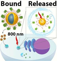 Developing light-activated nanocarrier to transport proteins into cells
