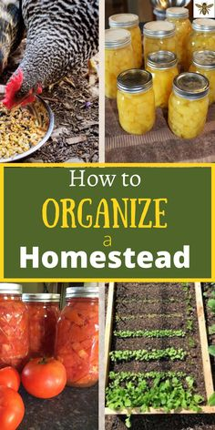 If you want to run a homestead well, then you need to be organized! How to organize a homestead? With the right tools, you can plan and run an organized and profitable homestead! Check it out! Modern Homesteading, Grow Your Own Food, Food Facts, Fermented Foods, Preserving Food, Urban Gardening, Gardening Tips, Natural Living, Farm Life