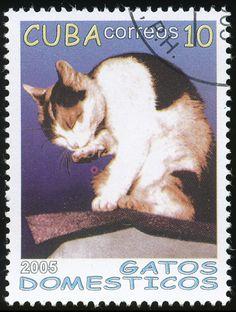 Cuba 2005 Cat Stamps - Domestic Cats