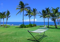 Relax on the Oceanfront Hammock