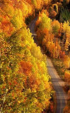 Autumn Road... I find it totally intriguing that the road looks like a ribbon of plaid. :-)