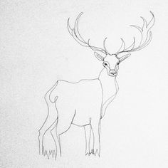 Oh deer! #illustation #onelinedrawing