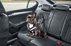 Skoda unveils a seat belt to keep your dog safe on the road Best Car Seats, Dog Car Seats, Dog Car Accessories, Dog Seat Belt, Dog Safety, Small Puppies, Dog Travel, Pet Life, Dog Care