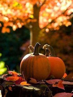 An essence of Autumn  #autumn #fall #pumpkins