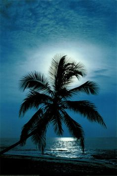 Palm Tree Beneath the Moon Beach Poster-An enchanting poster of a palm tree on the beach back-lit by the full moon - A tropical paradise for your walls! Beautiful Moon, Beautiful Beaches, Beautiful World, Beach Pictures, Cool Pictures, Outdoor Pictures, Moon Beach, Ocean Beach, Palm Beach