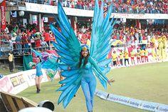 A beautiful Caribbean Airlines hummingbird takes flight at Steel Pan parade
