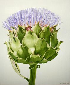 Artichoke by Susan Rhodes  We grew artichokes in the garden last year and I could not bring myself to pick them.  They were so beautiful.