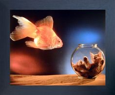Transform your habitat from boring dull walls into wow in the blink of an eye by hanging this goldfish and cute cat kitten in a fishbowl framed art poster. This framed poster goes well with all décor style and it will be a great addition for your beautiful sweet home. Its wooden espresso frame accentuates the poster mild tone. The frame is made from solid wood measuring 20x24 inches with a smooth gesso finish. This framed poster includes a saw tooth hanger on the back for easy display.