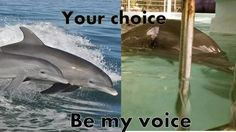 ⭐ Please sign and share ⭐ Petition · cyprus, Cyprus Government: Stop dolphin captivity · Change.org