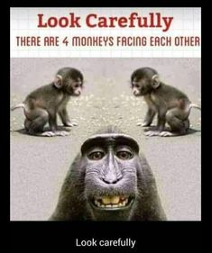 Guess the monkey. - Funny Monkeys - Funny Monkeys meme - - Guess the monkey. Monkeys Funny Guess the monkey. The post Guess the monkey. appeared first on Gag Dad. The post Guess the monkey. appeared first on Gag Dad. Funny School Jokes, Very Funny Jokes, Crazy Funny Memes, Funny Animal Memes, Really Funny Memes, Funny Animal Pictures, Funny Facts, Haha Funny, Funny Images