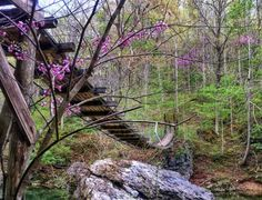 With Swinging Bridges, Caves, And Trails, Kentucky's Carter Caves State Resort Park Has It All Kentucky Hiking, Kentucky Vacation, Kayak Adventures, Parasailing, Tokyo Travel, Canoe And Kayak, Vacation Spots, Day Trips, State Parks