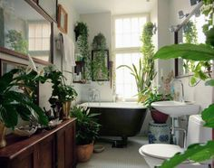 bathroom with tons of living plants. I love it but too much for my small bathroom but maybe on a smaller scale?