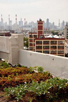 urban farm: techos llenos de vegetales, flores y oxígeno