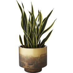 Shop sahara brass planter.   Round iron planter with modern stepped design roots plants in metallic chic.  Hand-distressed via a unique burning technique, color graduates from dark to light with an almost patina effect.  Each finish will be unique.