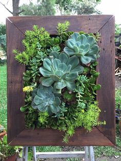 Living wall Check For the love of succulents fb page  https://www.facebook.com/pages/For-the-Love-of-Succulents-the-living-wall/1603195046581892  Instagram: @FTLO_succulents