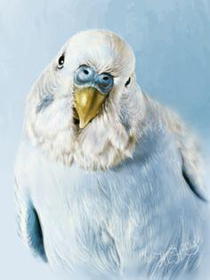 Blue Parakeet, Budgie Parakeet, Parakeets, Parrots, Owl Bird, Bird Art, Pet Birds, Bird Paintings, Animal Paintings