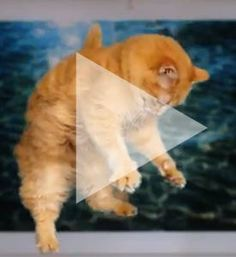 Fellow animal lover Dan Harris of GoodMorningAmerica showcases his talented adopted cat - George
