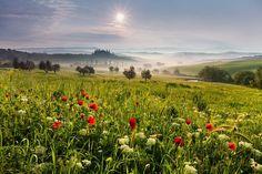 "Tuscan meadow - <a href=""http://www.danielrericha.cz"">www.danielrericha.cz </a> <a href=""https://www.instagram.com/danielrerichacz"">I N S T A G R A M</a> | <a href=""https://www.facebook.com/pages/Photographer-Daniel-%C5%98e%C5%99icha/141419165885869"">F A C E B O O K</a> Prints and licensing available at daniel.rericha@seznam.cz"