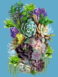 Shop NadineMay's Design By Humans Collective Store Cell Phone Covers, Succulents, Floral Wreath, Art Prints, Store, Plants, Shopping, Collection, Design