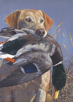 Prize Possession-Yellow Lab Print by Scot Storm|WildWings