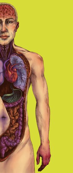 Human anatomical illustration by Teagan White for an article in WIRED Magazine about micro-organisms concentrating in certain parts of the body.   Art direction by Tim Leong.