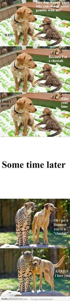 Cheetah and dog