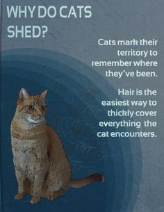 Why Do Cats Shed?