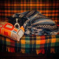 Find Momo | The playful adventures of a hiding border collie.