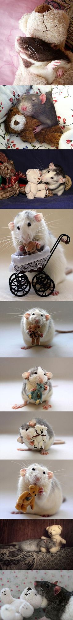 More rats with teddy bears.