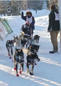 A Distinguishing Winter Ritual - Celebrating 25 Years of Marquette's UP 200 Sled Dog Race