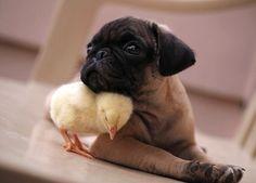 EstiloDF » Fugly y KFC, ¡amigos inseparables!