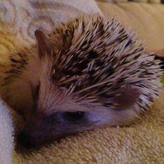 Sleepy quilson