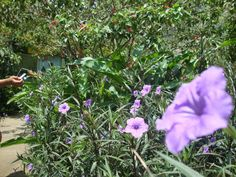 Zoologico de Cali - Departamento de Valle del Cauca - Opiniones y fotos - TripAdvisor