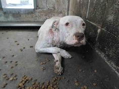 RESCUED BY S.T.A.R.T Shelter Transport Animal Rescue Team. Dog rescue needed for terrified dog in California shelter