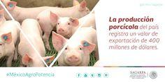 La producción porcícola del país registra un valor de exportación de 400 millones de dólares. SAGARPA SAGARPAMX #MéxicoAgroPotencia