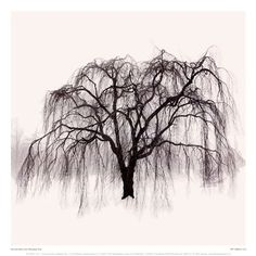 Weeping Tree, Art Print by Harold Silverman