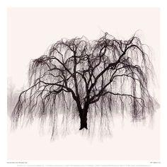 Weeping Tree, Art Print by Harold Silverman