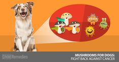 1 in 2 dogs gets cancer, but there is a food that can fight it. Mushrooms for dogs: the ultimate superfood. Here are the top 5 types and their benefits. Cat Nutrition, Nutrition Classes, Cat Diet, Dry Cat Food, Dog Food, Cat Playground, Dog Safety, Dog Fighting, Beautiful Cats