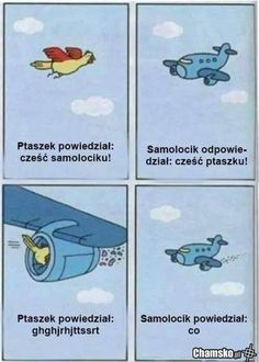 Bird And Plane Become Friends // funny pictures - funny photos - funny images - funny pics - funny quotes - Silly Pictures, Best Funny Pictures, Funny Photos, Funny Images, Best Memes, Dankest Memes, Polish Memes, Laughing So Hard, Say Hello