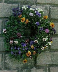 Living pansy wreath♥
