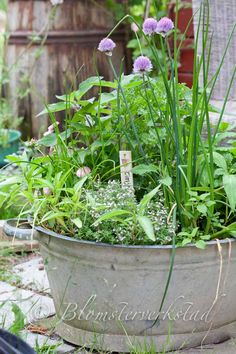 Herb garden/container garden using a metal washtub. Perfect recycling for after the bottom rusts out or breaks. Chives, thyme, oregano would be nice. Edible Garden, Garden Pots, Vegetable Garden, Potted Garden, Herb Pots, Herbs Garden, Container Plants, Container Gardening, Herb Gardening