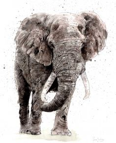 Zaza Shelley: Kruger Elephant