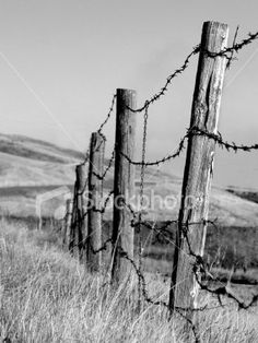 barb wire fence clip - photo #44