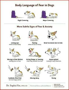 how to train a dog to behave around other dogs
