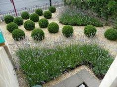 feel for front garden.  add hedge - hornbeam?  prunus lusitanca?