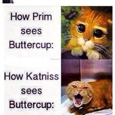 Lol haha funny pics / pictures / SO TRUE!! / Buttercup / Katniss / Hunger Games Humor / Shrek / Cats