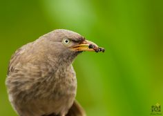 Jungle Babbler Creative Praveen's wildlife and nature photography portfolio. Images also available for print and sale. Best of Praveen's photography work. Contact Us!